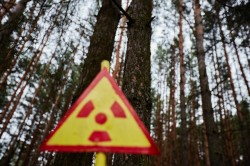 Red forest Chernobyl Exclusion Zone